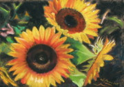 Floral Pastels Originals - Sunflowers by Shirley Galbrecht