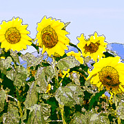 Sunflowers Sunbathing Print by Artist and Photographer Laura Wrede