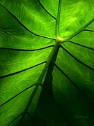 All Abstract Posters - Sunglow Green Leaf Poster by Patricia L Davidson