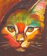 Kitten Prints Drawings Framed Prints - Sunkist Framed Print by Susan A Becker