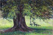 Colorado Trees Pastels Prints - Sunlight and Shadow Print by Billie J Colson