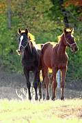 Keeneland Art - Sunlight Babies by PJQandFriends Photography
