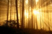 Spencer Prints - Sunlight In The Fog Print by Greg Vaughn - Printscapes