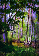 Sunshine Louisiana Framed Prints - Sunlight in the Swamp Framed Print by Judi Bagwell