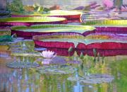 Pond Painting Prints - Sunlight on Lily Pads Print by John Lautermilch