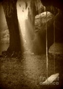 Live Oak Digital Art - Sunlight on Swing - Sepia by Carol Groenen