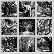Old Savannah With Moss Posters - Sunlight through Live Oaks Collage Poster by Carol Groenen