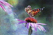 Painted Lady Butterflies Prints - Sunlit Print by Betty LaRue