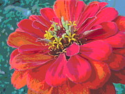 Padre Art Photos - Sunlit Giant Zinnia by Padre Art