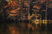 Tamyra Ayles - Sunlit Glow