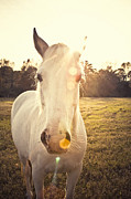 Sunflare Framed Prints - Sunlit Horse Framed Print by Erin Johnson