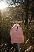 Burst Prints - Sunlit Mailbox Print by Ray Laskowitz - Printscapes