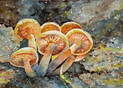 Tania Vasylenko - Sunlit Mushrooms