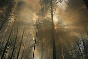 Natural Forces And Phenomena Posters - Sunlit Smoke Whispers The Firefighters Poster by Mark Thiessen