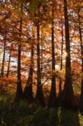 Tamyra Ayles - Sunlit Trees