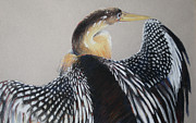 Great Art Pastels Framed Prints - Sunning Cormorant Framed Print by Flo Hayes