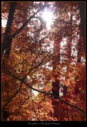 Landscap Framed Prints - Sunny Autumn Day Poster Framed Print by Carol Groenen