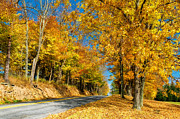 Fall Road Posters - Sunny Country Road Poster by Lois Bryan