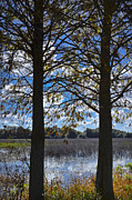 Florida Landscape Photography Prints - Sunny Day On The Pond Print by Carolyn Marshall