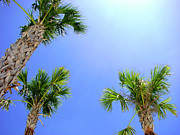 Trio Photos - Sunny Florida Palms by Carolyn Marshall
