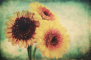 Floral Still Life Mixed Media Prints - Sunny Gerbera Print by Angela Doelling AD DESIGN Photo and PhotoArt
