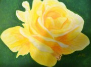 Anke Wheeler Paintings - Sunny Knockout Rose by Anke Wheeler
