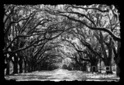 Georgian Landscape Photos - Sunny Southern Day - Black and White with Black Border by Carol Groenen
