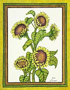 Botanical Drawings - Sunny Sunflowers by Judy Cheryl Newcomb