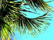 Palm Trees Fronds Posters - Sunny Tropical Afternoon Poster by Ann Powell