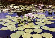 Waterlilies Art - Sunny Waterlilies by Jan Amiss Photography