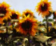 Sunflowers Art - Sunnyside Up by Colleen Taylor
