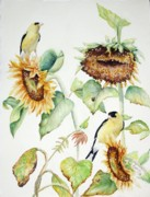 Goldfinch Framed Prints - Sunnyside Up Framed Print by Patricia Pushaw