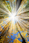 Tall Prints - Sunrays in the forest Print by Elena Elisseeva