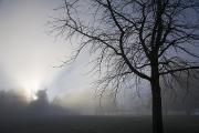 Fog Art - Sunrays Through Fog by Craig Tuttle