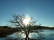 Phenomenal Originals - Sunrise at Dead Tree Lake by Brian  Maloney