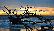 St. Simons Island Art - Sunrise at Driftwood Beach 1.1 by Bruce Gourley