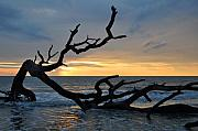 St. Simons Island Art - Sunrise at Driftwood Beach 1.2 by Bruce Gourley