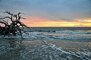 Driftwood Posters - Sunrise at Driftwood Beach 1.3 Poster by Bruce Gourley