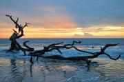 Dead Tree Posters - Sunrise at Driftwood Beach 1.4 Poster by Bruce Gourley