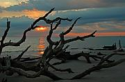Driftwood Posters - Sunrise at Driftwood Beach 2.2 Poster by Bruce Gourley