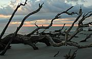 Brunswick Prints - Sunrise at Driftwood Beach 4.1 Print by Bruce Gourley
