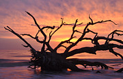 St. Simons Island Art - Sunrise at Driftwood Beach 6.1 by Bruce Gourley