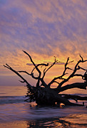 Jacksonville Prints - Sunrise at Driftwood Beach 6.2 Print by Bruce Gourley