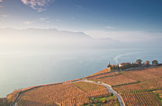 Aerial Posters - Sunrise At Lavaux Vineyard Terraces Poster by Harri