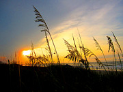 Sunrise Behind Sea Oats Print by Julie Bostian