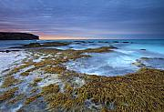 Seaweed Prints - Sunrise Beneath the Storm Print by Mike  Dawson