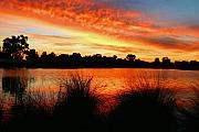 Sunrise River Framed Prints - Sunrise Canning River Framed Print by Tony Brown