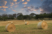 Fredericksburg Framed Prints - Sunrise in a Field of Hay Framed Print by Paul Huchton