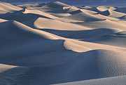 Sand Dunes Posters - Sunrise in Death Valley Poster by Sandra Bronstein
