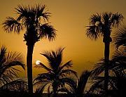 Mick Burkey - Sunrise in Paradise